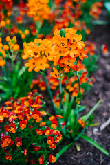 Orange (Graham Gibson) Tags: sony a7rii voigtlander 40mm f12 nokton fe phipps conservatory pittsburgh gardens