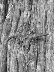 Photo of Tree Horns