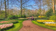 Happy Easter, Keukenhof Gardens, Netherlands - 2490 (HereIsTom) Tags: webshots travel europe netherlands holland dutch view nederland views you nature sun tourists cycle vakantie fietsvakantie cycling holiday bike bicycle fietsen plus apple ios camera iphone 8 2019 paasdagen pasen spring 9 keukenhof easter voorjaar happy geel flowers lente gardens seasons bulb tulpen tulips april yellow bollen green walking red walk egg trees hyacinth amsterdam break colorful lisse park bloemen colors colours