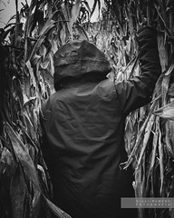 Quo vadis... 1 (Joan Romero) Tags: bw bn corn panís maiz dark nikond3300 nikon