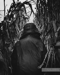 Quo vadis... 2 (Joan Romero) Tags: bw bn corn panís maiz dark nikond3300 nikon