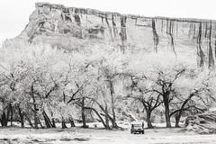Beneath the Cottonwoods (RoamingTogether) Tags: 70200vrii arizona beautywayjeeptours blackandwhite canyondechellynationalmonument chinle jeep nationalmonument nationalpark nikon nikon7020028 nikond700 wrangler