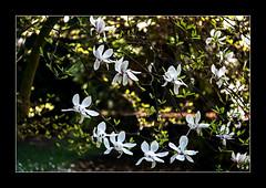 Magnolie im Gegenlicht (Pippilotta aus dem Tal) Tags: sel90m28g