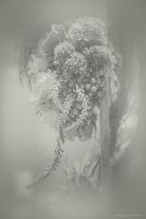 Flower Study in Monochrome, no. 16_52_2019 (a g a t a d p r a w d z i k) Tags: photography fineart bw nj princeton ppc toned agatadprawdzik flowers stilllife dream misty healing wellness