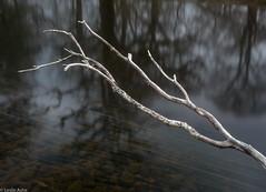 Dead branch (Donard850) Tags: connemara ireland reflectionsdeadtree river trees