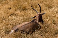 SafariWest-_DSC1412 (Vamsi K) Tags: california nature safari wildlife google santarosa ca usa