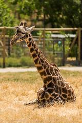 SafariWest-_DSC1430 (Vamsi K) Tags: california nature safari wildlife google santarosa ca usa