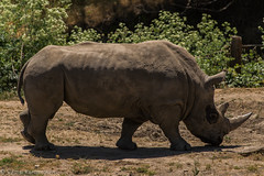 SafariWest-_DSC1531 (Vamsi K) Tags: california nature safari wildlife google santarosa ca usa