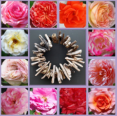Sei heilig mir, o Tag voll Segen (amras_de) Tags: rose rosen ruža rosa ruže rozo roos arrosa ruusut rós rózsa rože rozes rozen roser róza trandafir vrtnica rossläktet gül dornenkrone coronadespines trnovákoruna crownofthorns dornokrono coronadeespinas saintecouronne ancoróindeilgneach trnovakruna coronazionedispine doornenkroon koronacierniowa coroadeespinhos törnekrona karfreitag goeievrydag viernessanto velikipetak divendressant velkýpátek langfredag goodfriday grandavendredo suurreede ostiralsantu pitkäperjantai vendredisaint aoineanchéasta nagypéntek föstudagurinnlangi venerdìsanto diespassionisdomini karfreideg lielapiektdiena goedevrijdag wielkipiatek sextafeirasanta vinereamare velkýpiatok velikipetek långfredagen