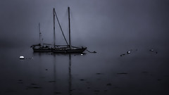 The Moored Boats and the Foggy Bay (jessicalowell20) Tags: bay black boats buoys estuary evening fogmonochrome gray maine moodysky moored newengland northamerica sailboat seaweed spring weather white wiscasset