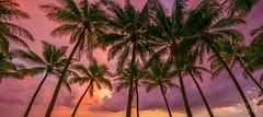 Psychedelic Sunrise (Lee Roach - Fenix Blue) Tags: farnorthqueensland palmtrees sunrise colour burst sand australia tourism beach