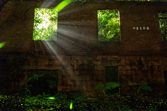 D68_5635 (brook1979) Tags: 台灣 三峽 新北市 礦坑 廢墟 遺址 建築 牆 房 螢火蟲 春 四月 firefly newtaipei building bug green night shine lights 斜射光