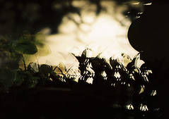 no title (biancarosa.looman) Tags: analog handheld reflection silhouettes sunlight canon kodakfilm