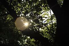 Silhouettes of spring (MoparMadman63) Tags: silhouette tree leaf foliage wood trunk sun bright shade shadetree neighborhood backyard irvingtx texas spring