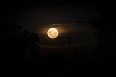 Easter Moon (Serendigity) Tags: adelaide australia easter mountlofty plympton sa southaustralia evening fullmoon moonrise