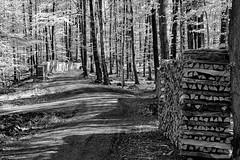 Infrared spring forest (Odenwald-Fotograf) Tags: infrared spring forestforest wald infrarot frühling hessen odenwald