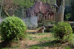 09042019 Zoom Zoo Gelsenkirchen 18 (peschuschach) Tags: zoo zoom gelsenkirchen