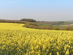 Meon Valley Views (martin_swatton) Tags: meon valley views landscape sky rapeseed hot summer olympus omd em1 mkii mzuiko 124 28 pro polariser