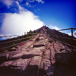 The Path Forward thumbnail