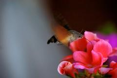 La naturaleza se abre paso (Carlos M. M.) Tags: hdr macro sony sonyalpha6000 huesca hoyadehuesca aragón bug flower flor insecto