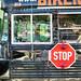 Blue Bird / International U.S. Bus