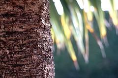 Bark (Chris Goodacre) Tags: sonya6000 neewer32mmf16lens chrisg35mm photoscape gardenflora