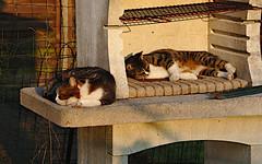 BBQ (Lady twenty6) Tags: cats bbq