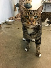 Manny - 7 year old neutered male