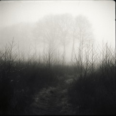 (no49_pierre) Tags: 120 medium format rollfilm folding range finder landscape march early spring misty morning