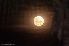 Soon we'll be without the moon, humming a different tune and then There may be teardrops to shed So while there's moonlight and music and love and romance Let's face the music and dance  #decoracao #arquitetura   #quadro #nikon #autoral #fotografia #nikko (Marcelo Adaes) Tags: moonlight photo lensculture decoracao fotografia nikon nikkor palmtree myfeatureshot moon autoral arquitetura quadro decor design photography architecture