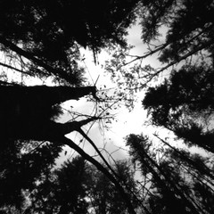 (facenorth) Tags: rolleirpx25 zeroimage2000 pinhole pinholephotography trees hiking mediumformat blackandwhite bw longexposure lomography 120film scan negative selfdeveloped kodakhc110 filmisnotdead