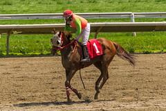 Mission of Honor (Barnett, Wayne) (avatarsound) Tags: boston suffolkdowns horse horseracing horses jockey jockeys race racetrack racing rider riding sport