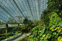 Cloud Forest conservatory in the Gardens by the Bay, Singapore (UweBKK (α 77 on )) Tags: singapore southeast asia sony alpha 77 slt dslr cloud forest conservatory greenhouse green super tree plant architecture gardensbythebay garden bay park flora