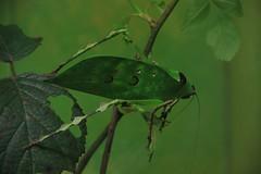 Sauterelles (Sp6mEn Pics) Tags: taxidermie animaux empaillés disparus vivants lille france hautsdefrance nord lynx araignée loup dinosaure oiseau squelettes mammifère marin momie insects