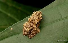 Not a Frog but a Moth (Ecuador Megadiverso) Tags: andreaskay ecuador jardinbotanicolasorquideas moth