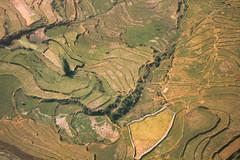 1080420IMG_1657 (richilmoonl) Tags: terracedfield sapa vietnam scenery field