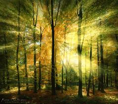 The Forest Awakes (keesvandongen) Tags: heather sunset sunrise dusk dawn naturephotography nature mood light sunlight warm mist misty fog foggy water channel landscape landscapephotography skyscape sky night keesvandongen keske thenetherlands trees woods tree wood twilight forest