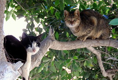 Hanging Out (Khaled M. K. HEGAZY) Tags: nikon coolpix p520 raselbar egypt nature outdoor closeup plant tree leaf leaves foliage cat animal feline stray green blue brown pink black