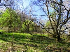 IMG_0094x (gzammarchi) Tags: italia paesaggio campagna natura montagna palazzuolosulseniofi lafaggiola valicodelparetaio casa rudere bosco