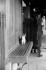 Leica_m_BW_63268_Cat_Pan400 (OPTIK AXIS) Tags: blackandwhite ilfordpan400 leicacamera leica mp 白黑 黑白 garylevel cat 貓 猫 ねこ ライカ rf mp85 カメラ camera 135 写真 底片 膠卷 taiwan 台灣 ライカmレンズ 単焦点レンズ フィルム 銀塩 film analoguephotography monochromatic blackandwhitefilm ノクティルックスm モノクロ