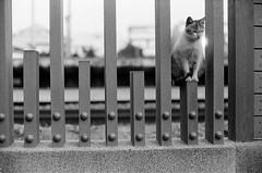 Leica_m_BW_63267_Cat_Pan400 (OPTIK AXIS) Tags: blackandwhite ilfordpan400 leicacamera leica mp 白黑 黑白 garylevel cat 貓 猫 ねこ ライカ rf mp85 カメラ camera 135 写真 底片 膠卷 taiwan 台灣 ライカmレンズ 単焦点レンズ フィルム 銀塩 film analoguephotography monochromatic blackandwhitefilm ノクティルックスm モノクロ