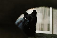 neko-neko2403 (kuro-gin) Tags: cat cats animal japan snap street 猫 sigma dp2