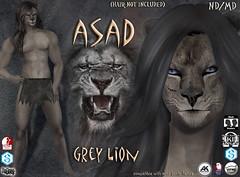 Asad avatar grey (Alea Lamont) Tags: ndmd asad lion avatar omega skin appliers catwa vista signature belleza male head body slink ak