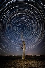 Circumpolar (franlaserna) Tags: beauty amazing longexposure tree stars nightphotography night