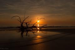 Tracks (anna_piatek) Tags: sunrise sky tree sea shore beach georgia coast jekyll island driftwood