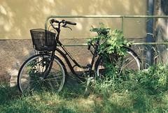 Cykel vs gräset
