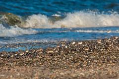 Sanderlings and Dunlins (mattbpics) Tags: shorebird sanderling dublin beach shore longbeach tamron 150600 150600mm canon 70d stratford