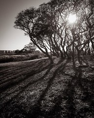 I can't decide if I like how this turned out or not. In person, the shadows were amazing! Let me know what you think... . . . . . . . ********* #shadows #outdoors #landscape #landscapephotography #bnw #bnw_greatshots #monochrome #travel #travelgram #sunse (IAMLESHER Photography) Tags: ifttt instagram i can't decide if like how this turned out or not in person shadows were amazing let me know what you think outdoors landscape landscapephotography bnw bnwgreatshots monochrome travel travelgram sunset sunsetbeachnc visitnc fujifilm myfujifilm fujifilmxseries fujifilmxus fujixlovers fujifeed myfujilove xt3 instagood artofvisuals fujifilmglobal fujifilmnorthamerica