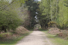 Old Railway line (ianspixs) Tags: landscape trees new forst dorst