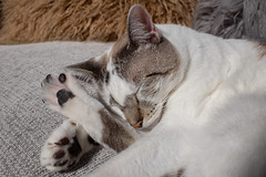 Magui009 (Matias Lynch) Tags: cat cats animal wild wildlife feline domestic buenosaires argentina